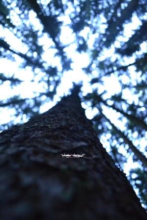 langes-licht_11_u