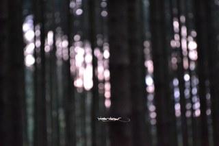 langes-licht_12_u